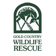 Gold Country Wildlife Rescue